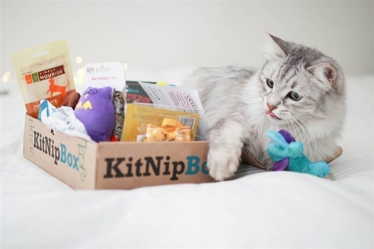 KitNipBox cat subscription box