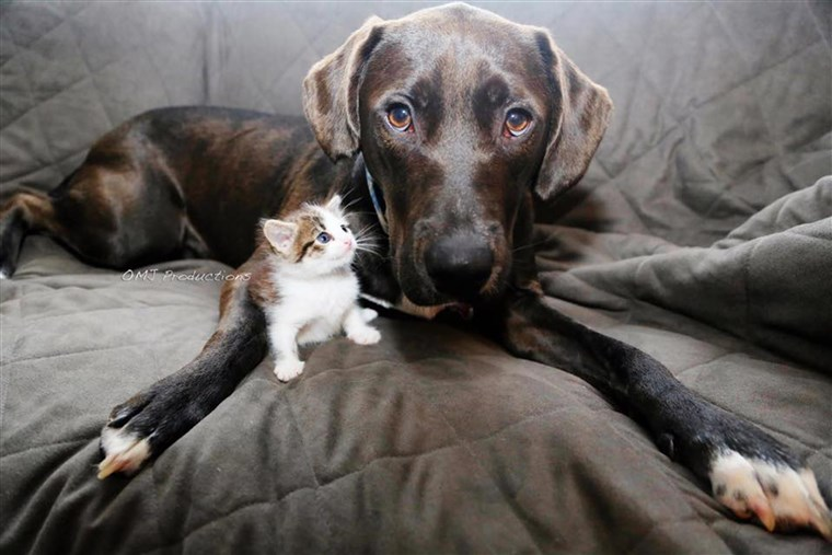 Harley Quinn the dog and Memphis the kitten were both adopted from Brooklyn's city shelter.