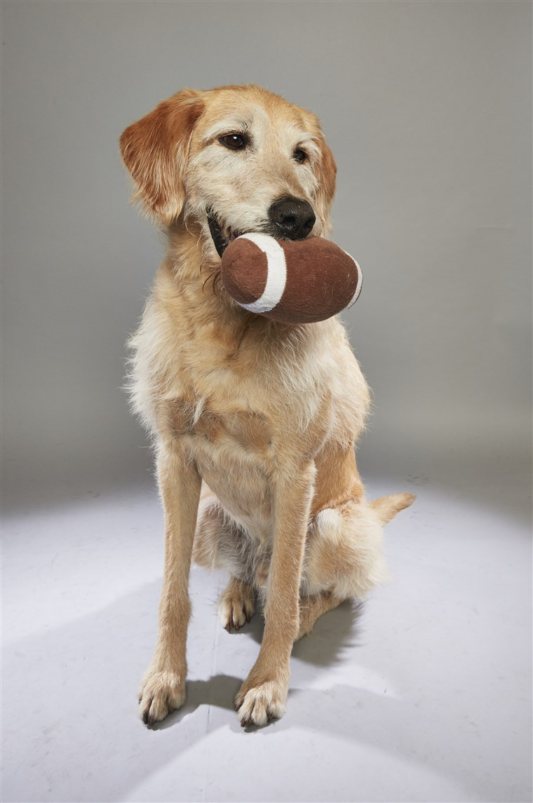 कुत्ता holding a football toy in his mouth