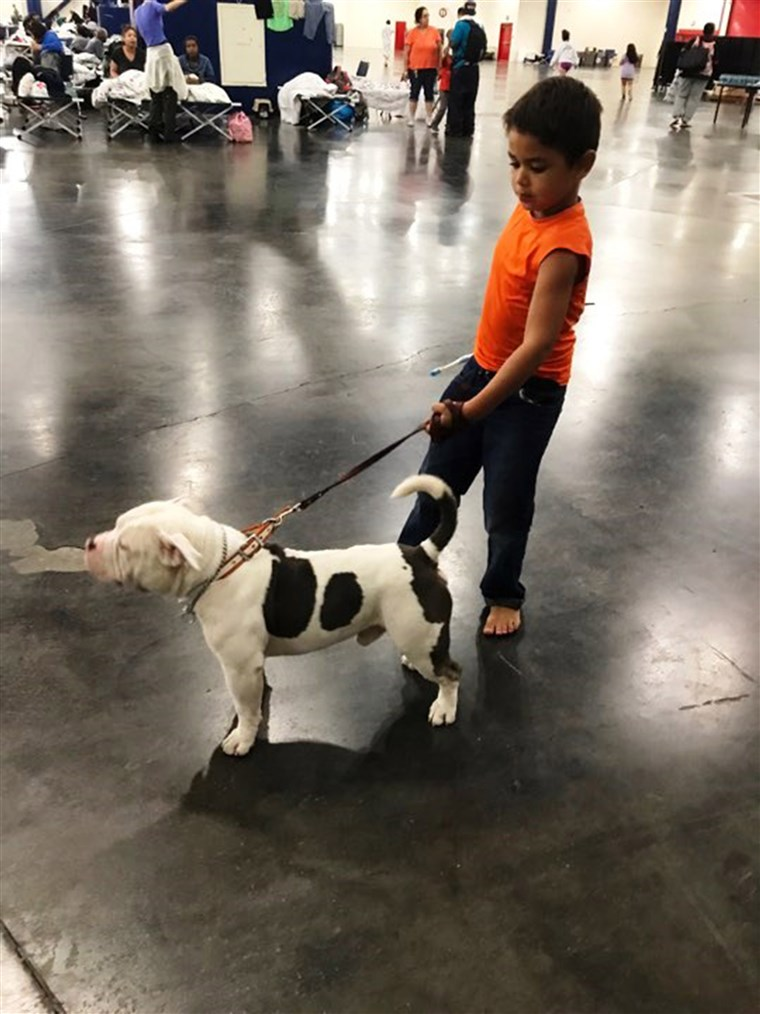 א boy and his dog at the George R. Brown Convention Center in Houston.
