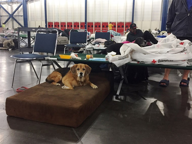 כמה nonprofits are helping care for pets sheltering with their families at The George R. Brown Convention Center in Houston.