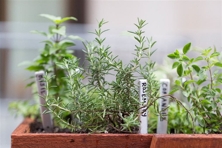 Martha Stewart grows an herb garden on the TODAY plaza