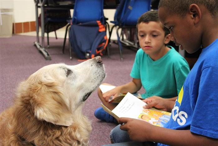 Bretagne the search dog helps a first-grader to read aloud.