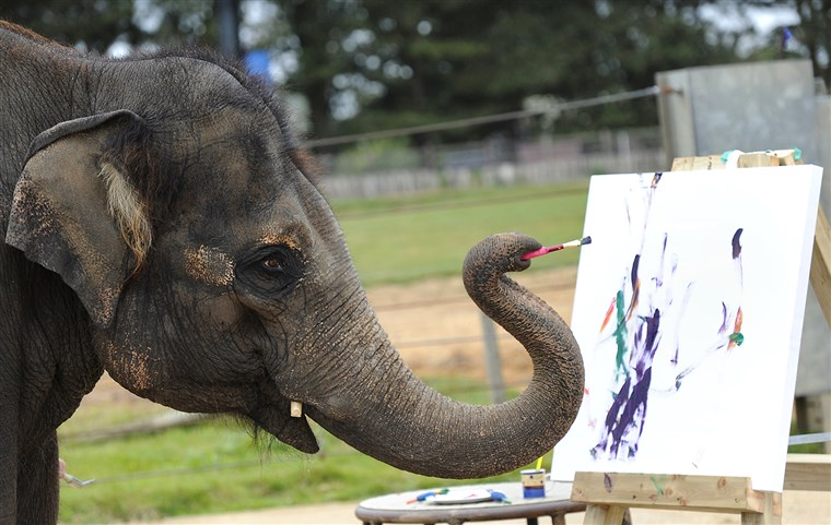 Karishma, a 13-year old female Asian elephant, and also Whipsnade Zoo's 'resident artist' uses her trunk to wield a brush and paint on canvas at Whips...