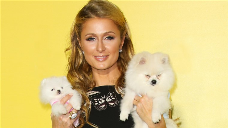 पेरिस Hilton and her dogs