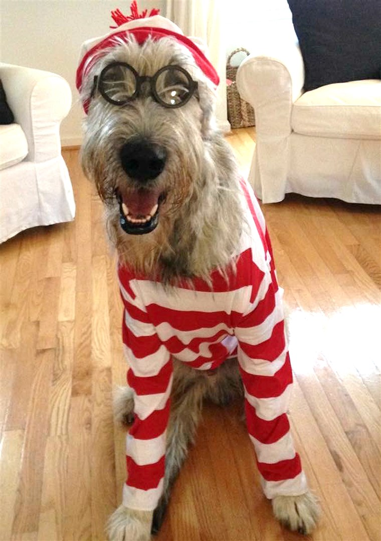 Hol's Waldo dog in costume