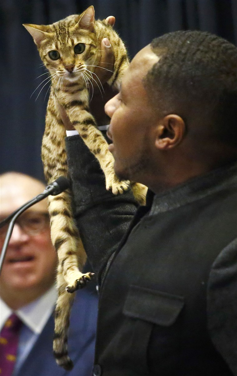 Antonije Hutcherson shows off a Bengal Cat during a press conference, Monday Jan. 30, 2017, in New York