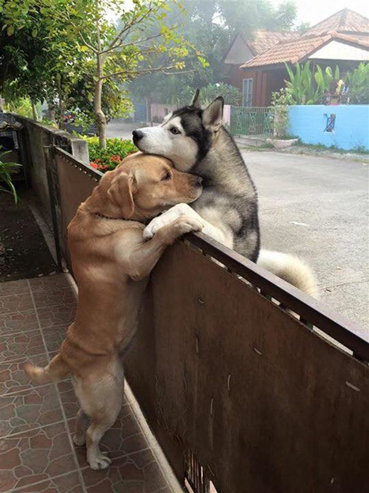 आस - पड़ोस dogs are best pals in Thailand