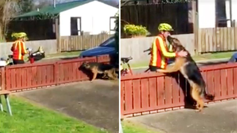ए mailman in Tauranga, New Zealand, takes a break to play with a dog.