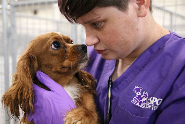 SPCA of Texas puppy mill bust