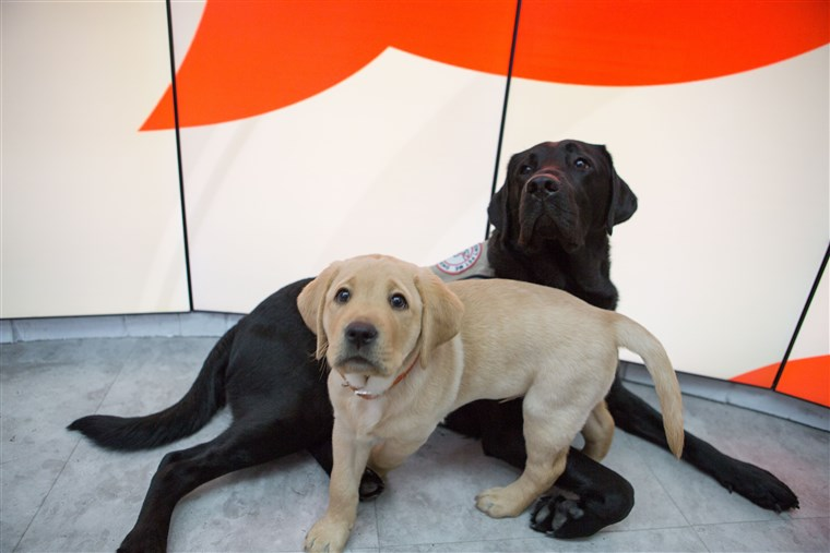 आज puppies with a purpose Sunny and Charlie