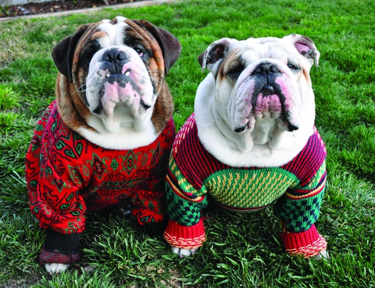 Azta, who even knew you could buy ugly holiday sweaters for dogs?